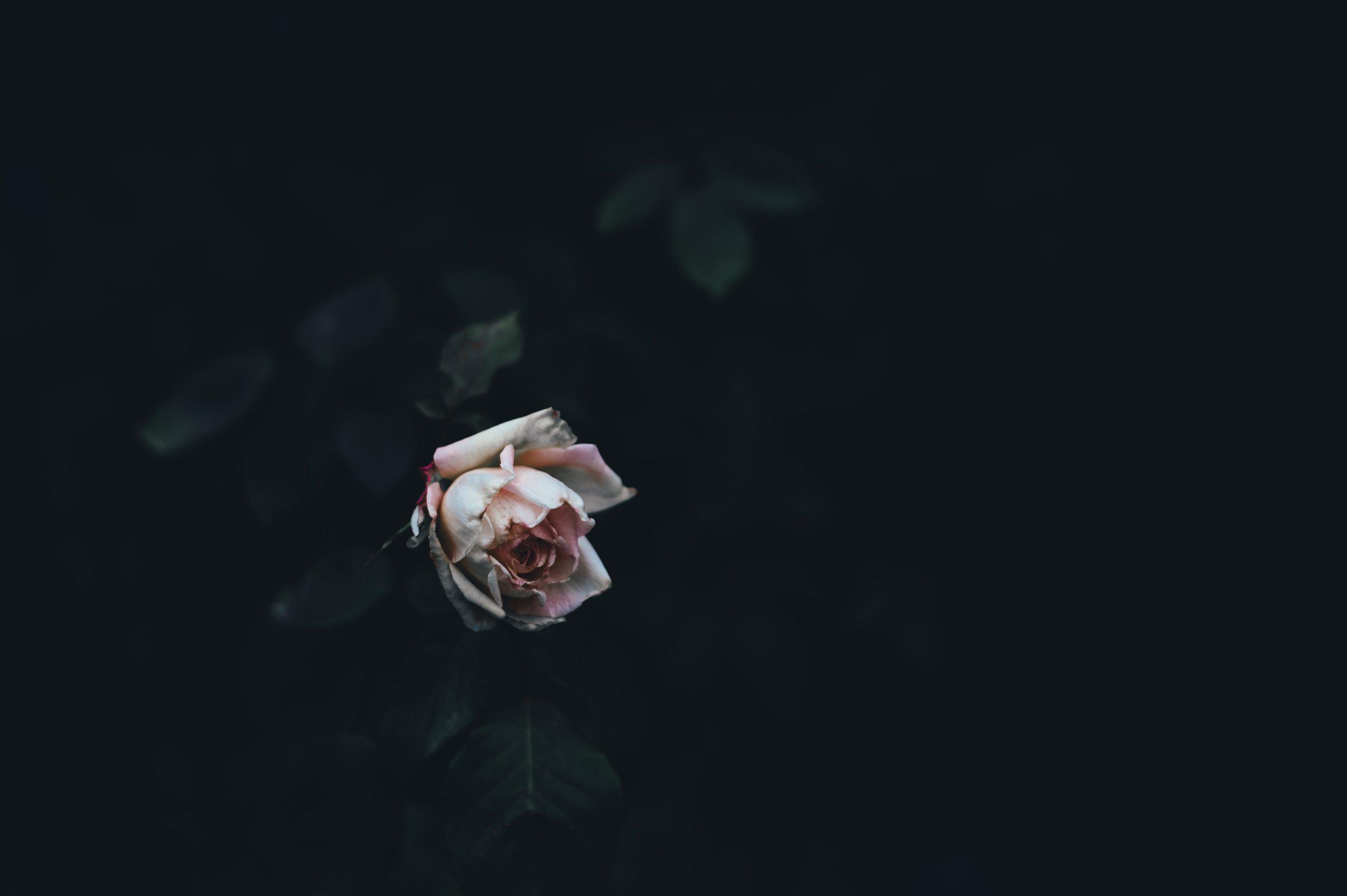デストルドーと自殺をする人の心理…それって防ぐことはできるの?
